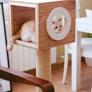 FeelWoodBCN productos para tu mascota