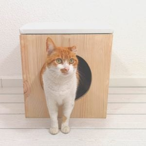Fullmoon-catcube1