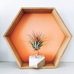 Boreen hexagonal dorada