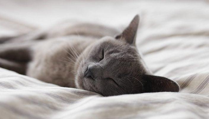 Cómo hacer una cama para gatos 5