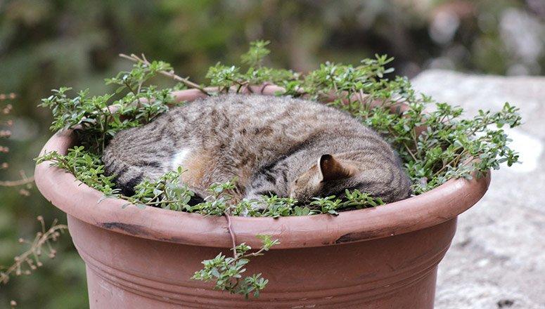 Cómo hacer una cama para gatos 4