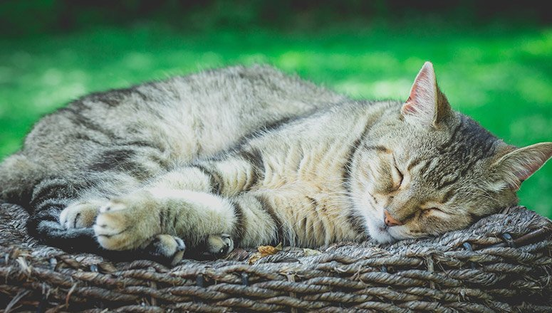 Cómo hacer una cama para gatos 2