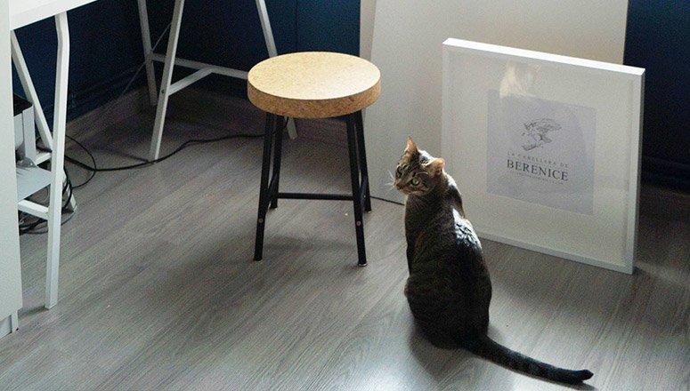 La Cabellera de Berenice gato