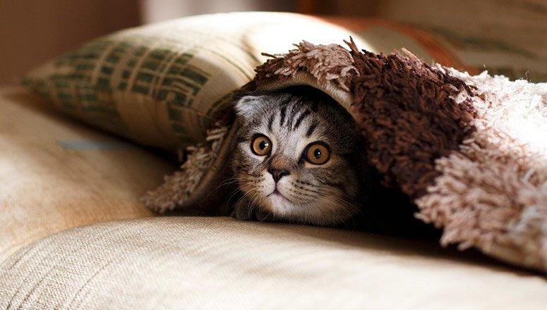 Cómo hacer una cama para gatos 3